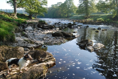 River Wharfe at Addingham view